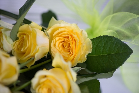 Ls yellow rose   detail 2